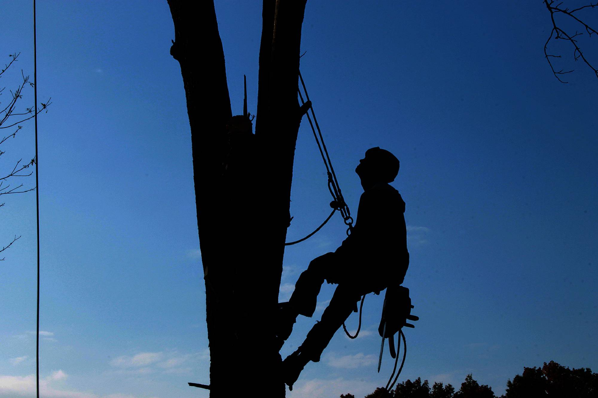 Proper Property Maintenance - Arborist, New Plymouth, Taranaki